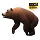 3D Bear 3