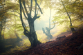 Mystical autumn forest in fog in the morning - PhotoDune Item for Sale