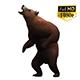 3D Bear 5
