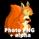 Rufous Squirrel Sitting and Eating Nuts - VideoHive Item for Sale