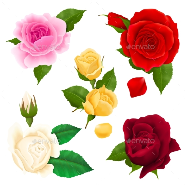 GraphicRiver Rose Realistic Set 20582956