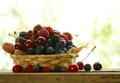 Harvest of Berries
