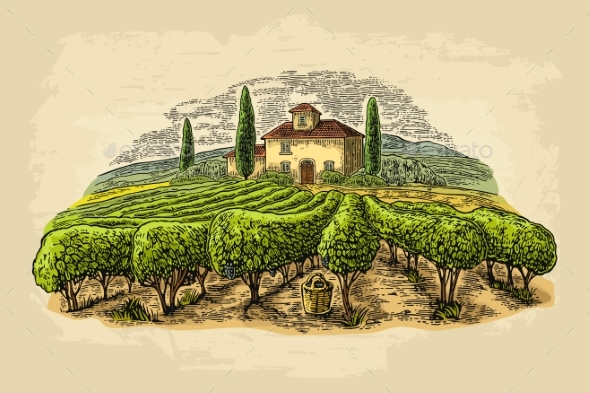 GraphicRiver Rural Landscape with Villa and Vineyard Fields 20583637