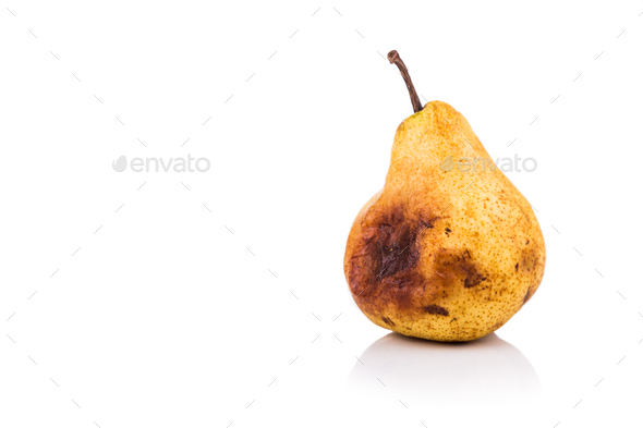 Rotten and decomposing pear on white background - Stock Photo - Images
