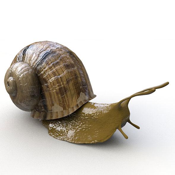 3DOcean snail 3D model 20587662