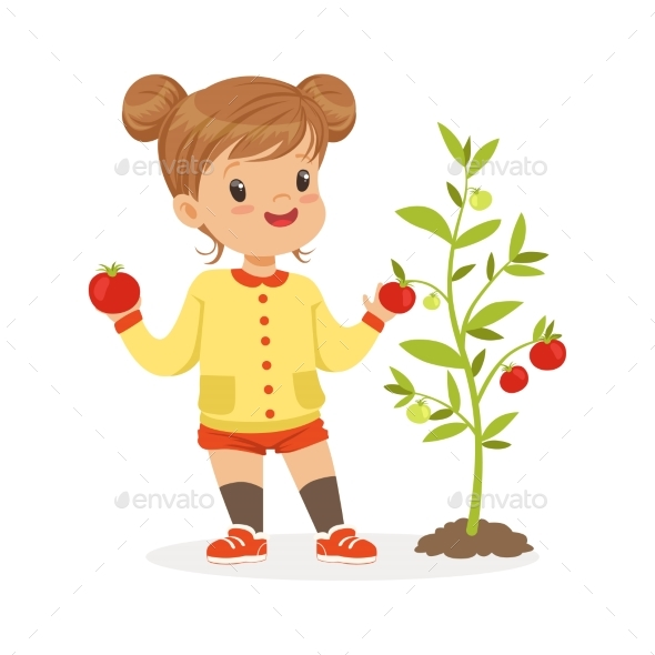 Girl Picking Tomatoes in the Garden - Food Objects