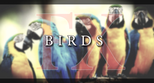 BIRDS FX
