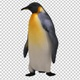 Confused Penguin (2-Pack) - VideoHive Item for Sale