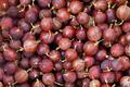 Gooseberry - PhotoDune Item for Sale
