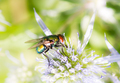 Macro of a fly on a blossom - PhotoDune Item for Sale