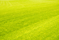 Perfect short cut green grass background - PhotoDune Item for Sale