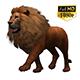 3D Lion Animation 9