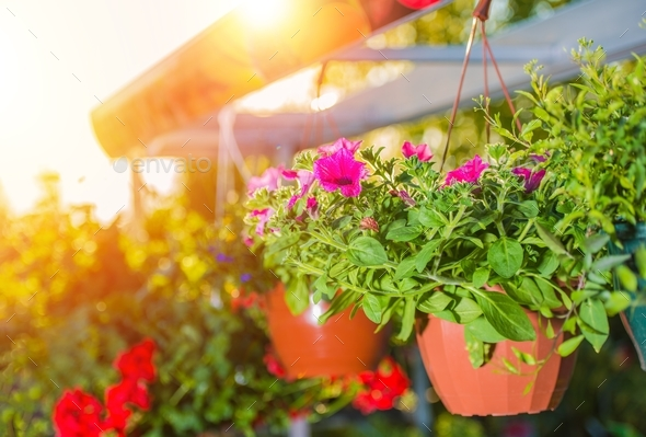 Hanging Flower Pots - Stock Photo - Images