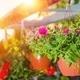 Hanging Flower Pots - PhotoDune Item for Sale