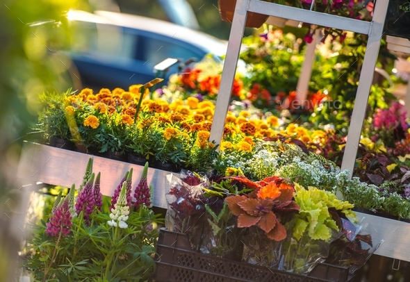 Garden Flowers Business - Stock Photo - Images
