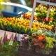 Garden Flowers Business - PhotoDune Item for Sale