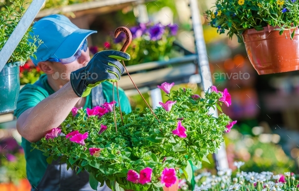 Gardener in the Greenhouse - Stock Photo - Images