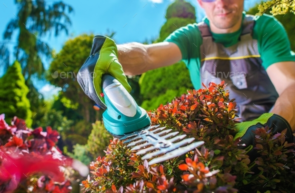 Garden Plants Trimming - Stock Photo - Images