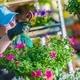 Gardener in the Greenhouse - PhotoDune Item for Sale