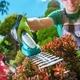 Garden Plants Trimming - PhotoDune Item for Sale