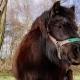Shetland Pony  Spring - VideoHive Item for Sale