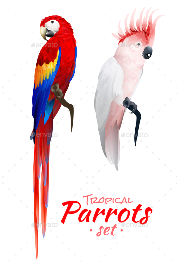 GraphicRiver Tropical Parrots Realistic Set 20594369