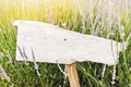 Singpost in grass and lavender field. Rustic board - PhotoDune Item for Sale