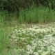 Very Drought Wetland, Swamp, Drying Up the Soil - VideoHive Item for Sale