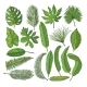 Colored Pictures Set of Tropical Leaves - GraphicRiver Item for Sale