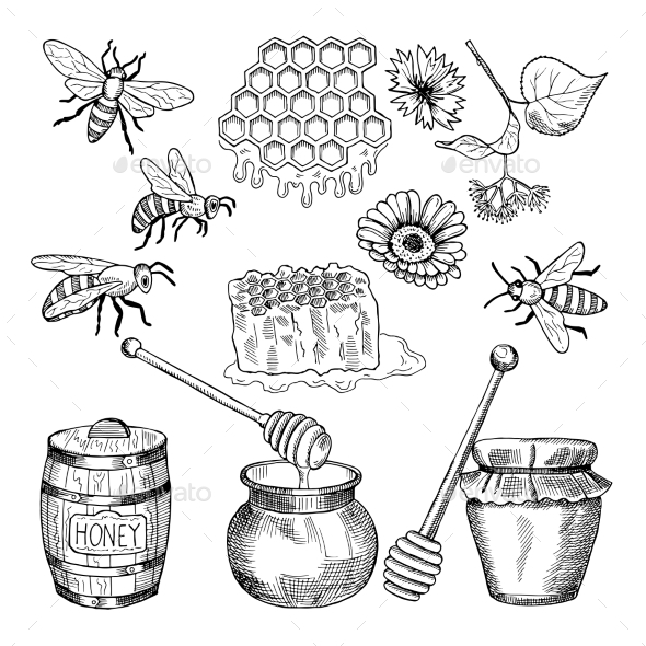 Vector Hand Drawn Pictures of Honey Products - Food Objects