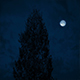 Big Tree On Windy Night - VideoHive Item for Sale