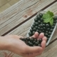 Hand Pours Out a Handful of Black Currant Berries in a Plate - VideoHive Item for Sale