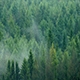Mist Rising Slowly In The Forest - VideoHive Item for Sale
