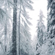 Snow Falls In Winter Forest - VideoHive Item for Sale