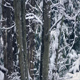 Tree Trunks In Winter With Snow Falling - VideoHive Item for Sale
