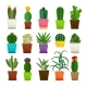 Cactus Houseplants in Flower Pots Set
