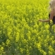 Young Blonde Woman Posing in Beautiful Rapeseed Field - VideoHive Item for Sale