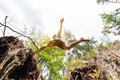 Young man making a jump in the forest. - PhotoDune Item for Sale