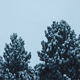 Bushy Trees In Blizzard - VideoHive Item for Sale