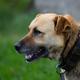 Dog, a portrait  - PhotoDune Item for Sale