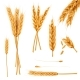 Wheat Ears and Seeds Realistic Vectors Collection - GraphicRiver Item for Sale