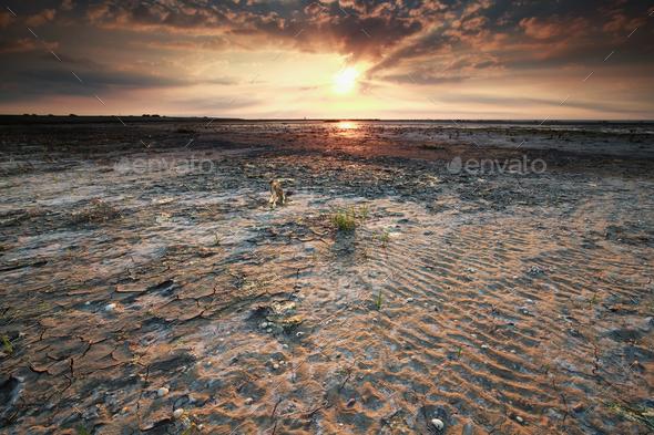 beautiful gold sunset on Wadden sea coast - Stock Photo - Images