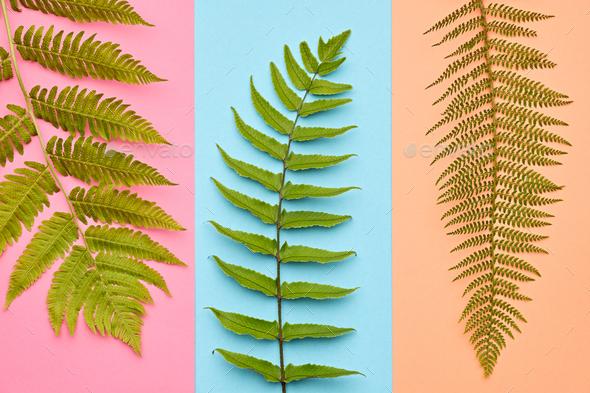 Fashion Tropical Leaf.Minimal Art.Fern Leaf.Summer - Stock Photo - Images