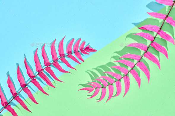Tropical Leaf - Stock Photo - Images