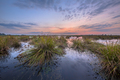 Large clumps of Soft rush under pastel sunset