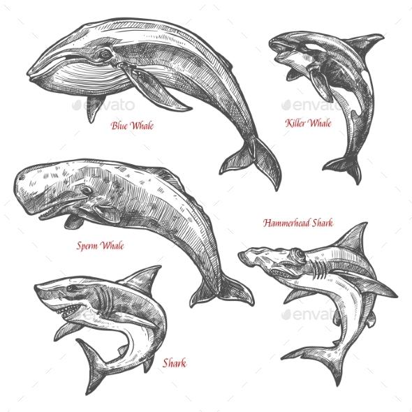 GraphicRiver Sea Animals 20609084