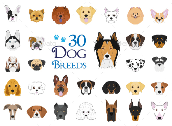 GraphicRiver 30 Dog Breeds Vector Collection 20609410