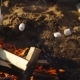 Shot of Skewers with Marshmallow, Which Is Cooked on Fire on Summer Day - VideoHive Item for Sale