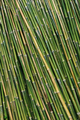 Bamboo background - PhotoDune Item for Sale