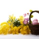 Bouquet of mimosa and easter eggs - PhotoDune Item for Sale
